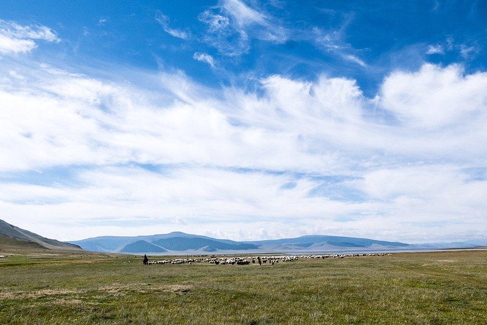 steppe-herding