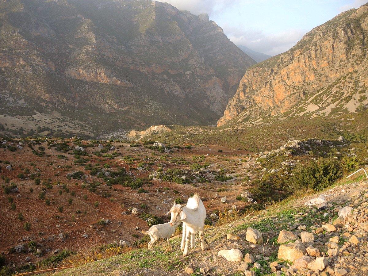 Malle_Morocco_Field_Report23